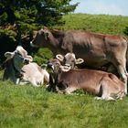 5 Freunde auf der Weide