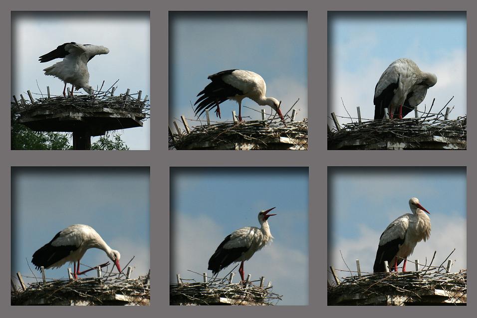 5 Minuten aus dem Leben eines Storchs