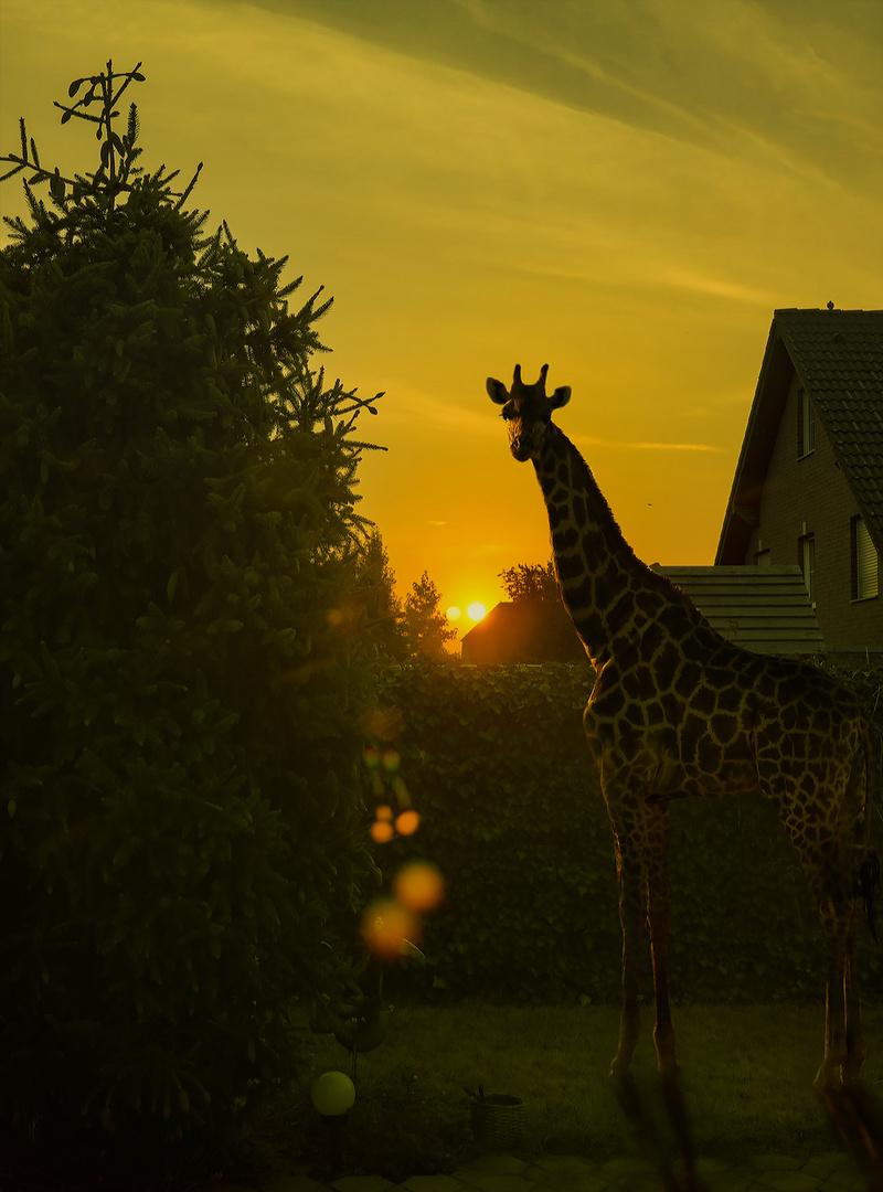 5 minuten später stand plötzlich eine giraffe da ...