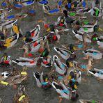 58 Enten und 2 Blässen