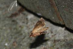 """(5/8) Nur eine große """"Motte"""" ..."""