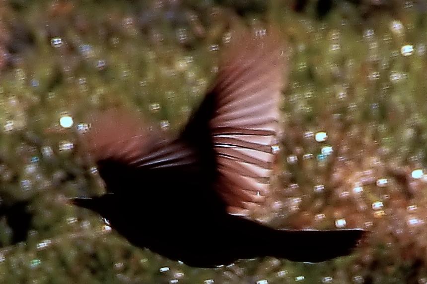 Flugbewegung