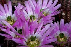 6 Blüten im Stachelwald