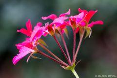 6 Blüten und ein Stiel