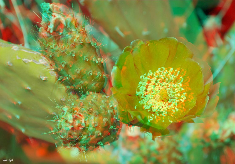 6. _ Kaktus _ La Gomera _