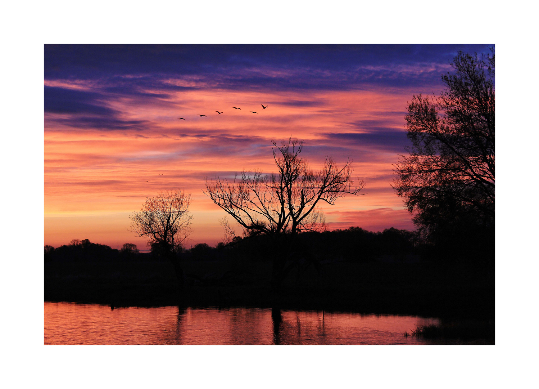 6 Kraniche vor Sonnenaufgang
