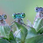 6 sympathetic little eyes