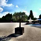 (6) Visite du lac de Constance: Bregenz: un olivier devant le théâtre