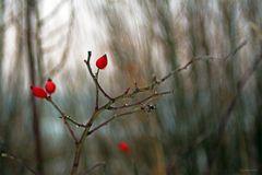 6- Wintertimes