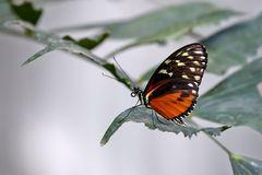 617_Schmetterling