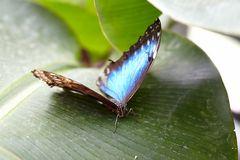 618_Schmetterling