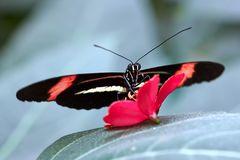 620_Schmetterling