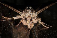 """(6/8) Nur eine große """"Motte"""" ..."""
