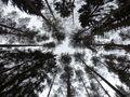 Trees von Sid Ric Schmidt