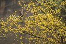 Landschaftspark - Frühling im Kletterpark von Oliver Bolch