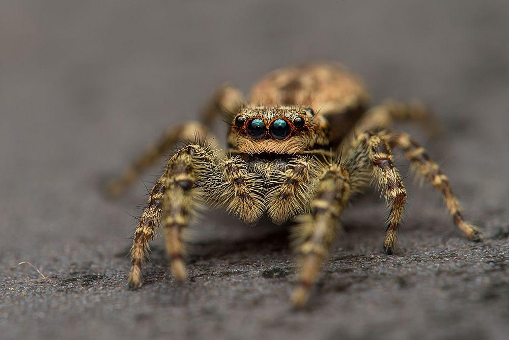 Spinne von Francesco Vitti