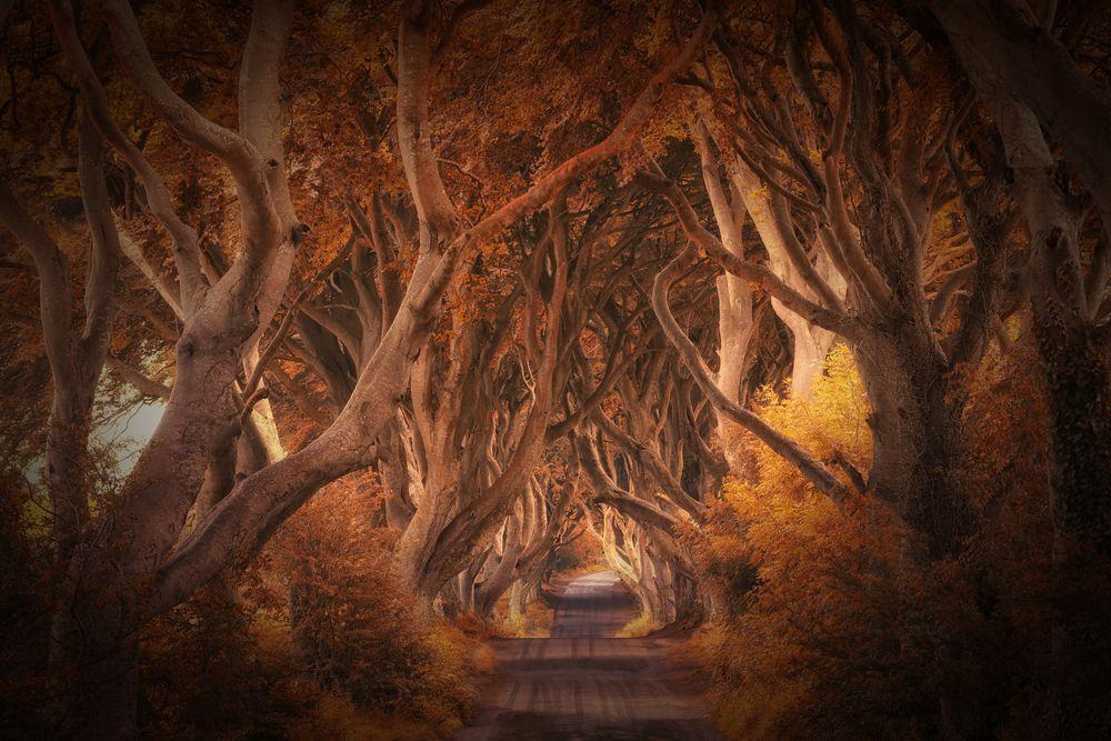 the dark hedges von Judith Kuhn