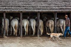 8 Chevaux de Camargue
