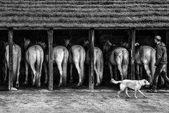 8 Chevaux de Camargue - en noir et blanc