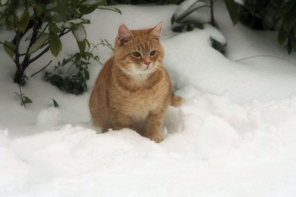 A B C die Katze.............