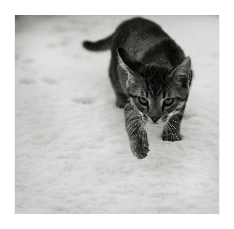A B C ...  die Katze lief im Schnee