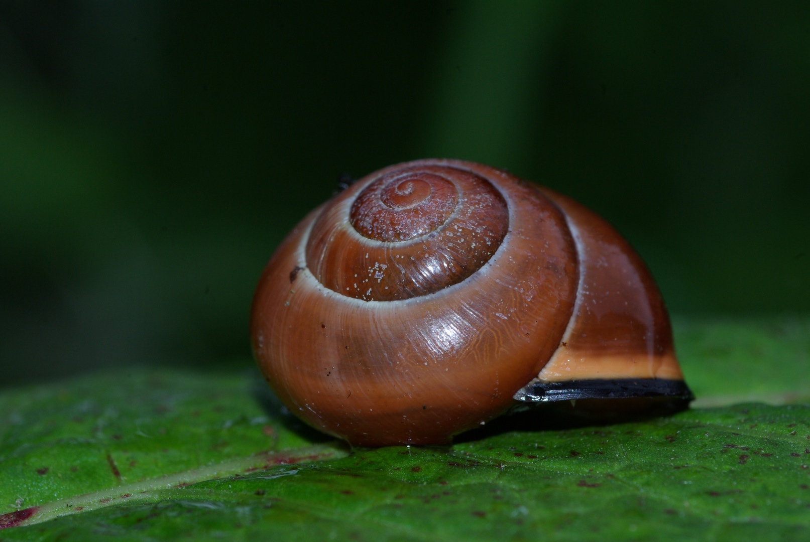 A beautiful little house of the snail !