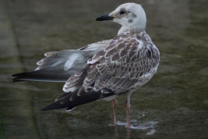 a bird 1