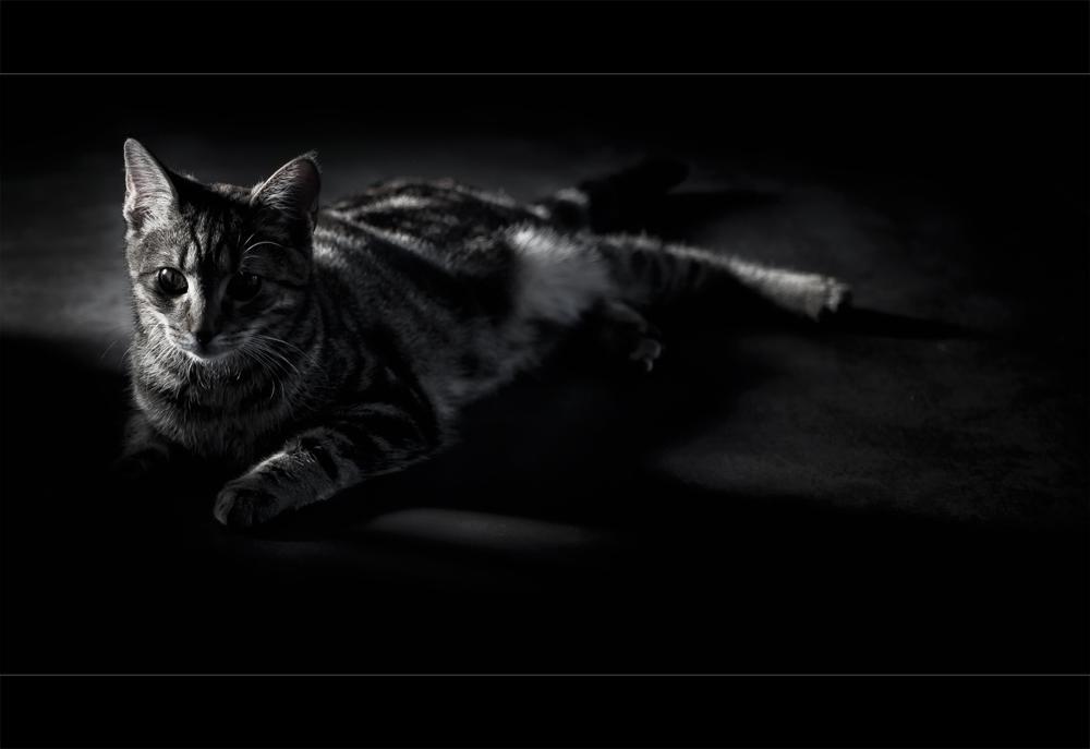 A black cat...