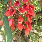 a brazilian flower in Vatican garden