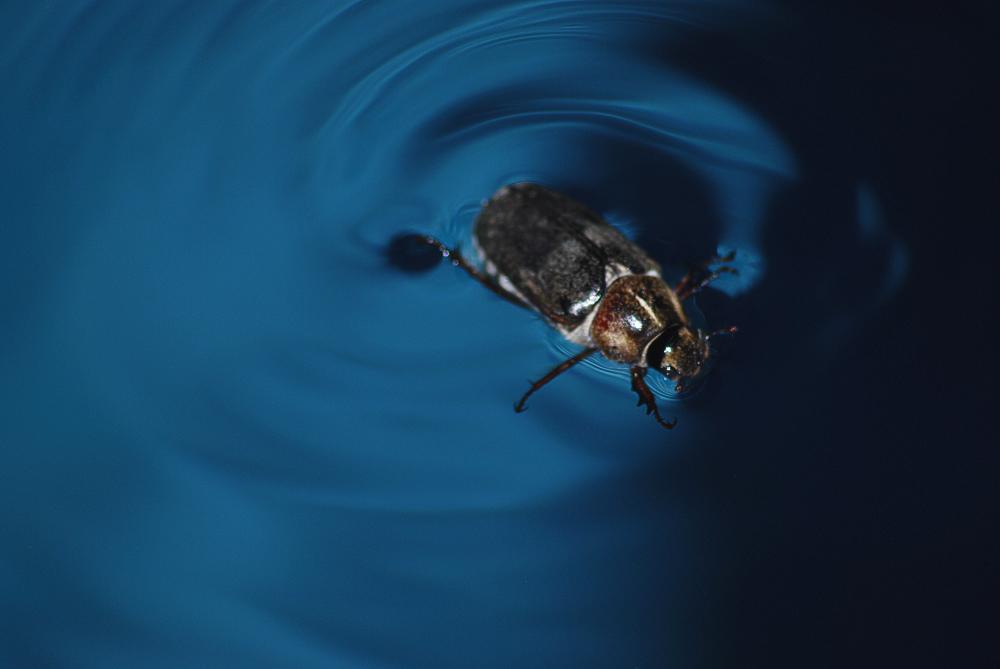 A Bugs Escape.