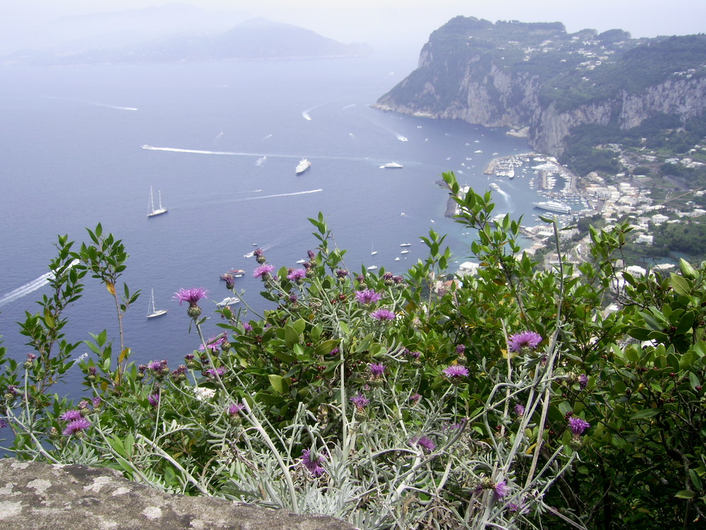 a Capri...