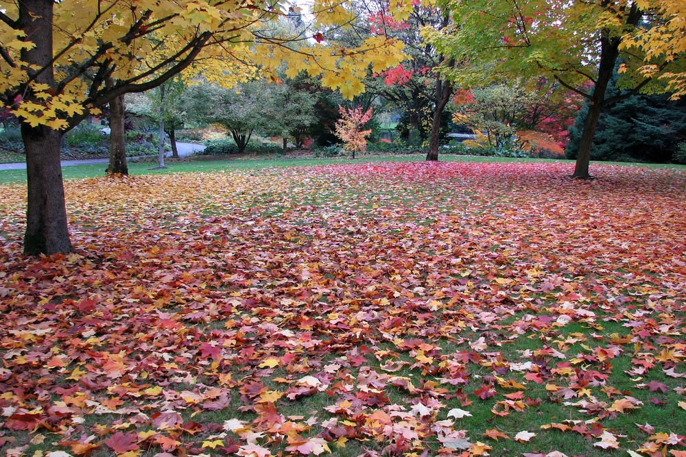 A Carpet of Autumn Leaves
