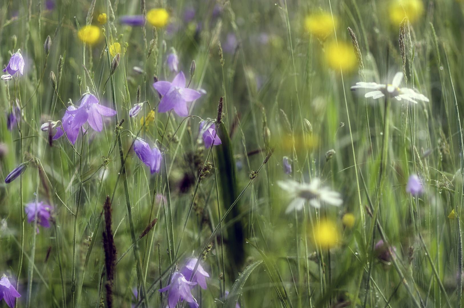 a case of spring
