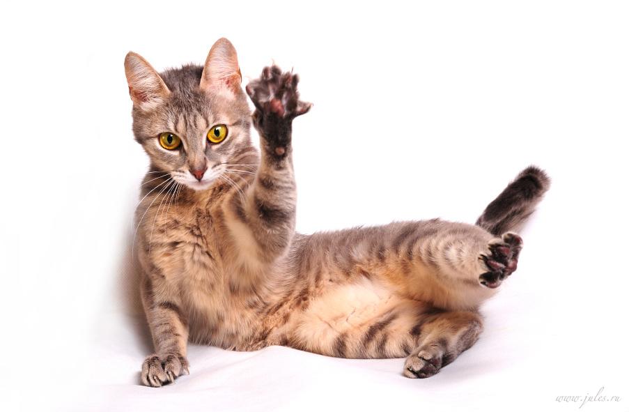 a cat named Cat