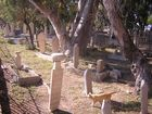 a cat walking in the old muslim cemetery in Rhodes Island