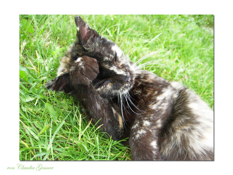 A Cat's Life (1)