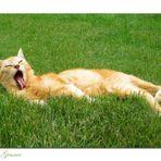 A Cat's Life (2)