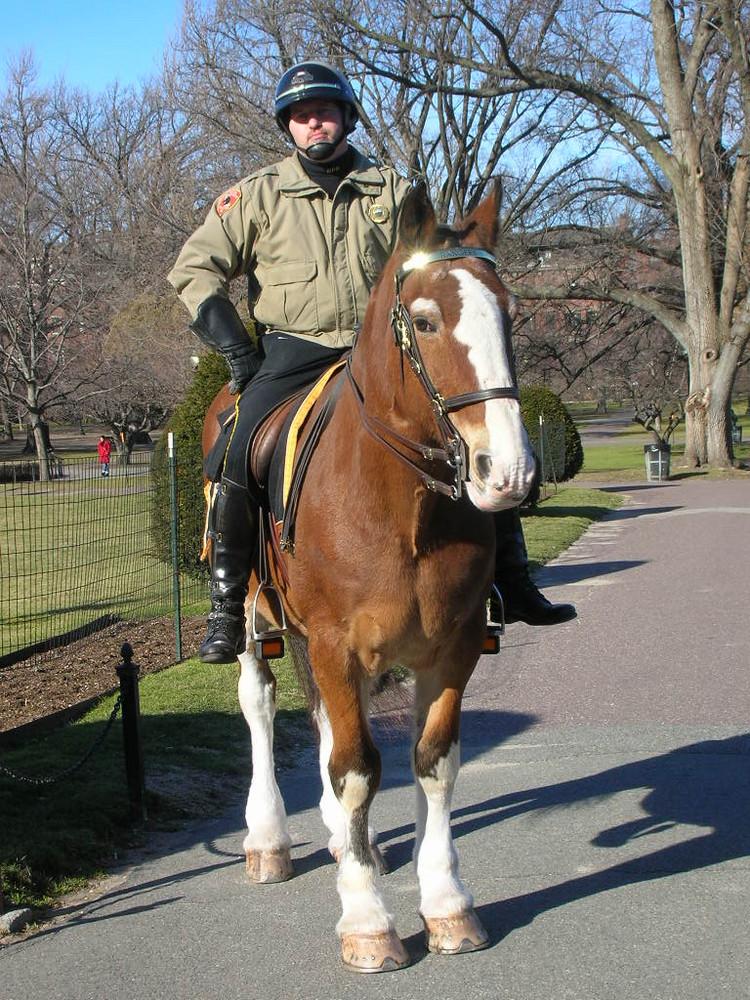 a cavallo per Boston