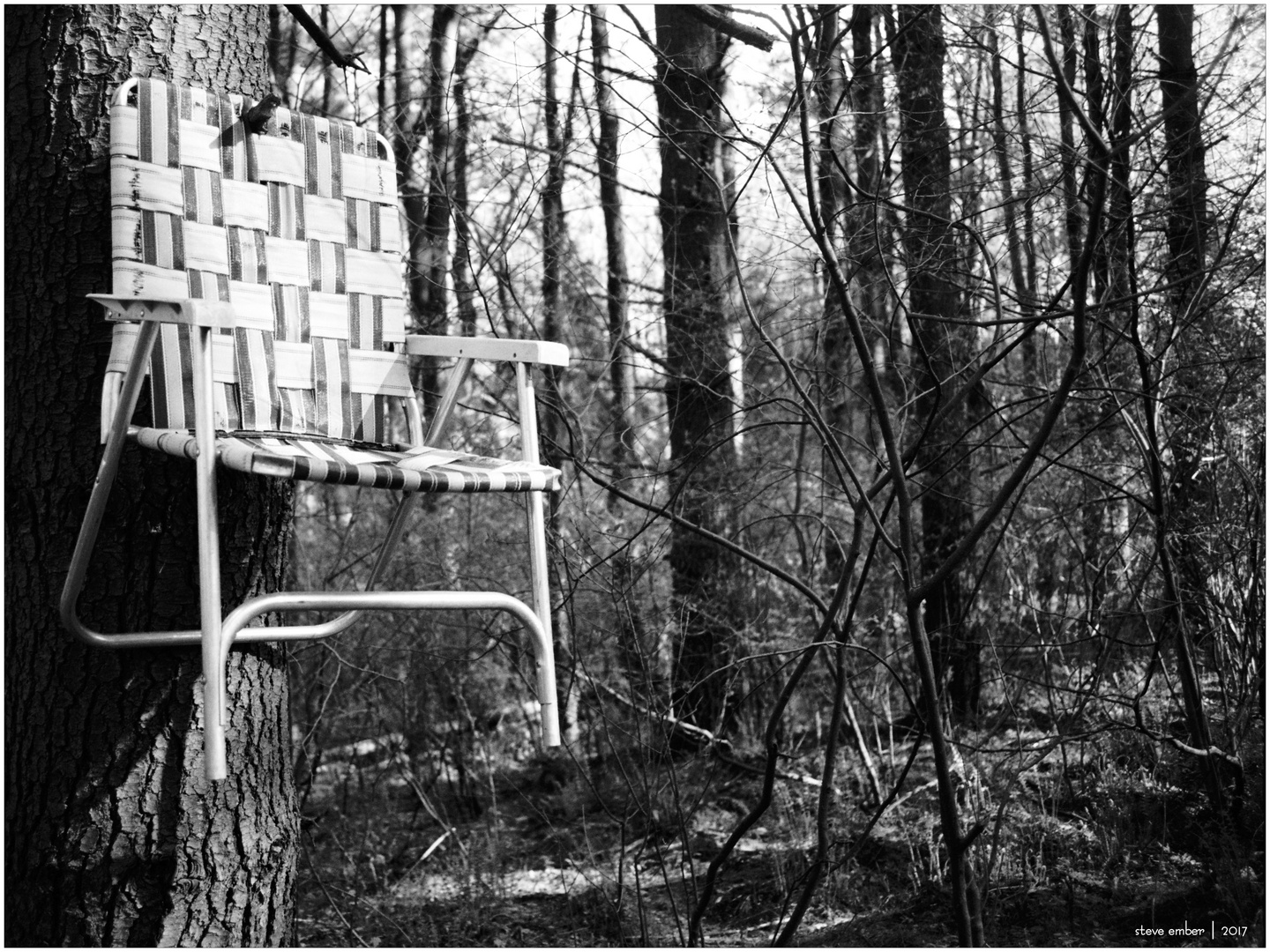 A Chair in the Forest