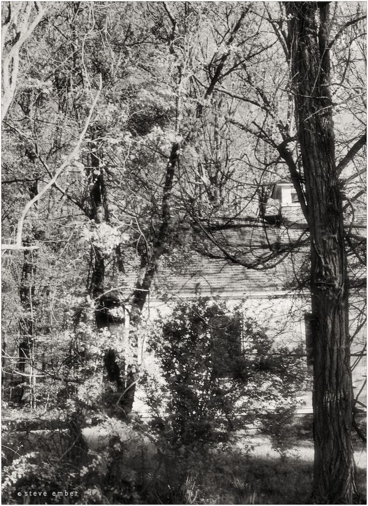 A Chapel in the Woods