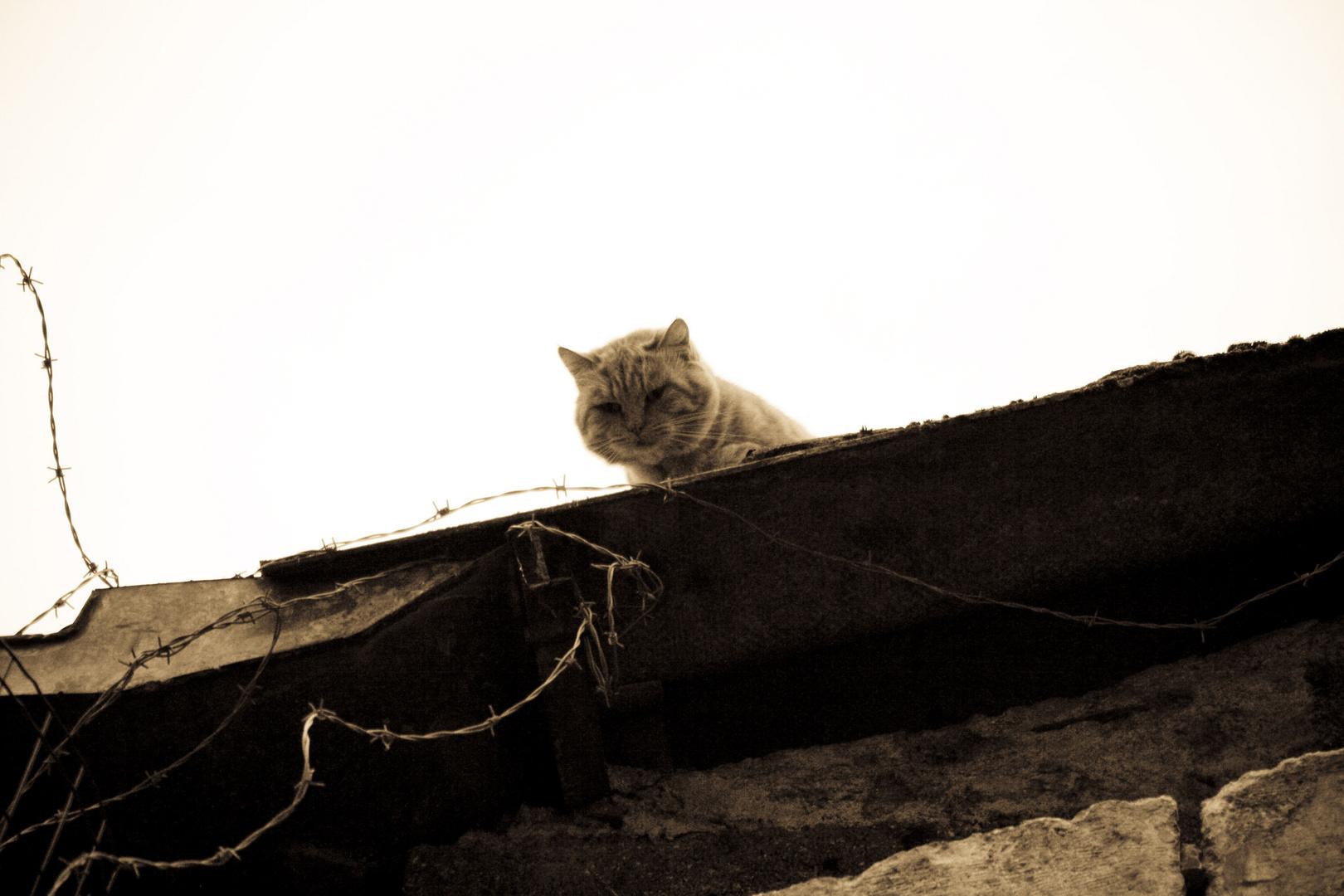 à chat perché