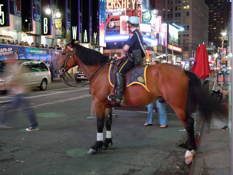 A cheval!