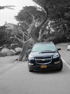 A Chevrolet and the Ghost Tree at the 17-Mile Drive