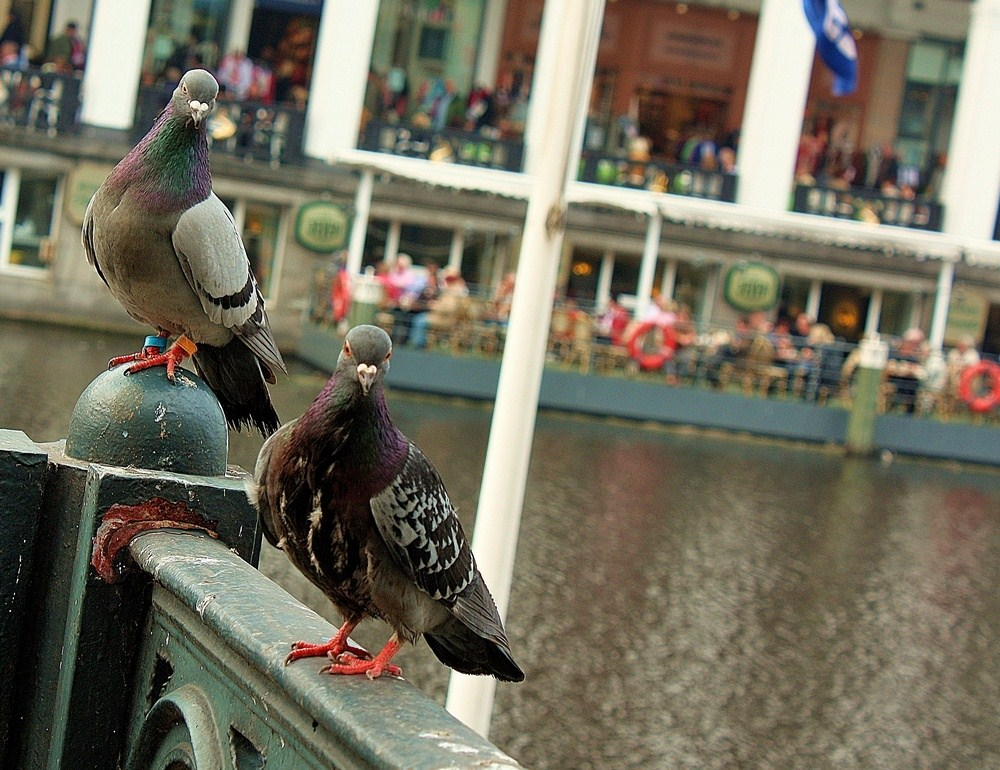 A couple.. (Hamburg, Alster)