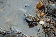 A Crab; Taean Oil Spill Coverage