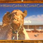 ** A Curried Camel Pie in a Outback Bakerie **