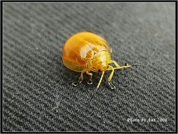 A cute beetle~~~