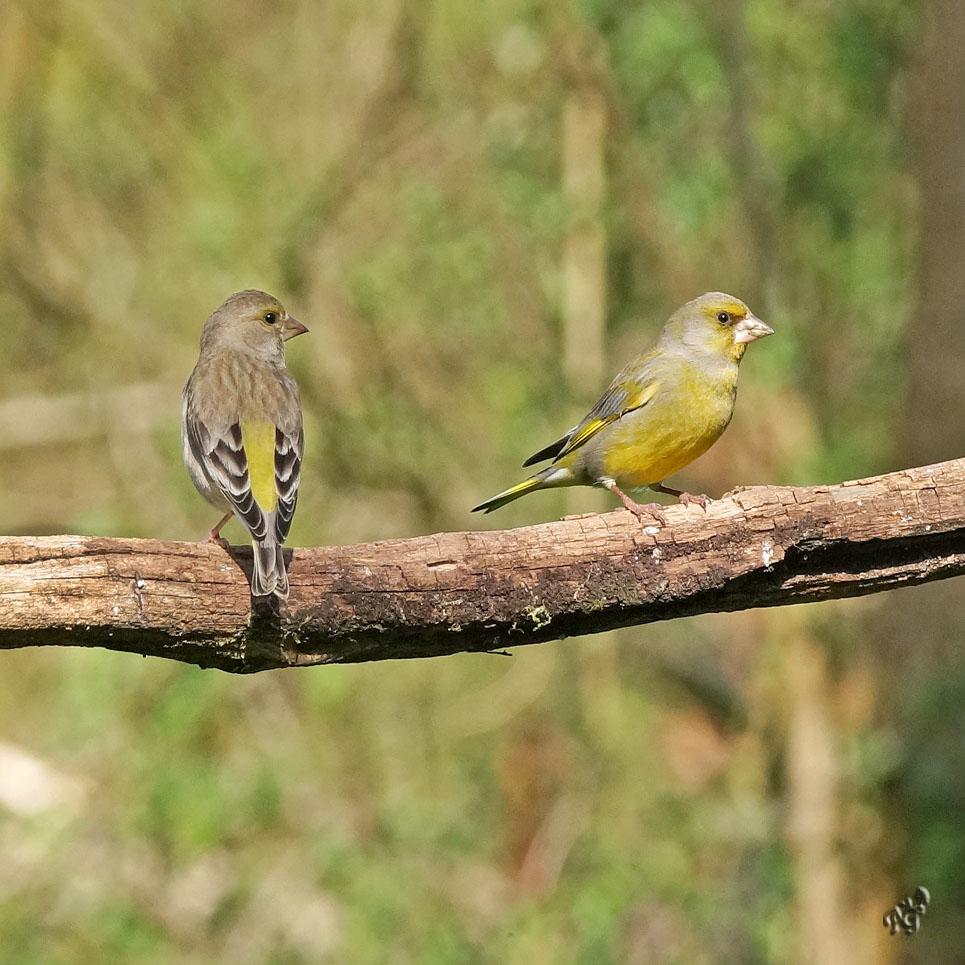 A deux ....sur la branche