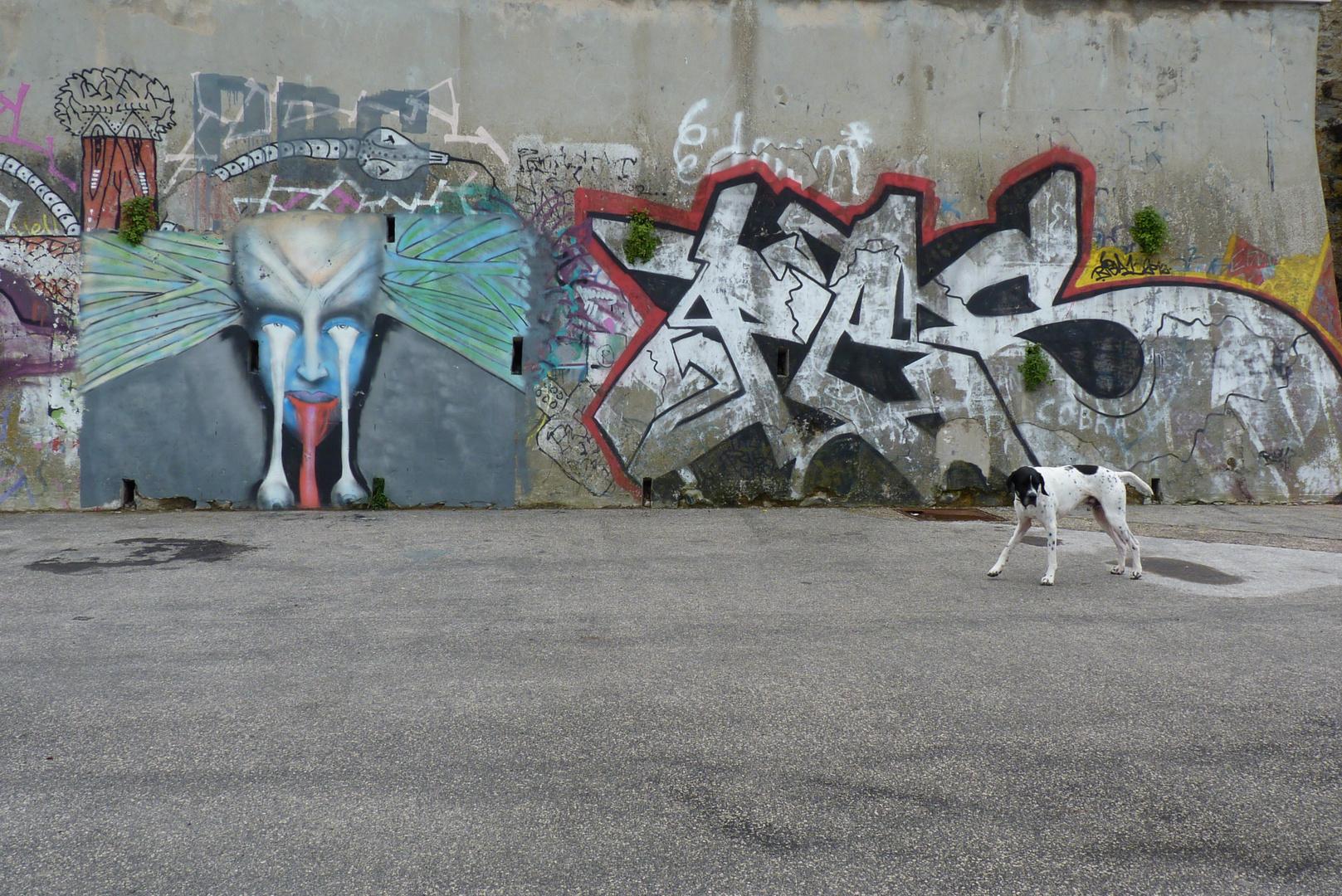 a dog and graffiti - gravity balanced