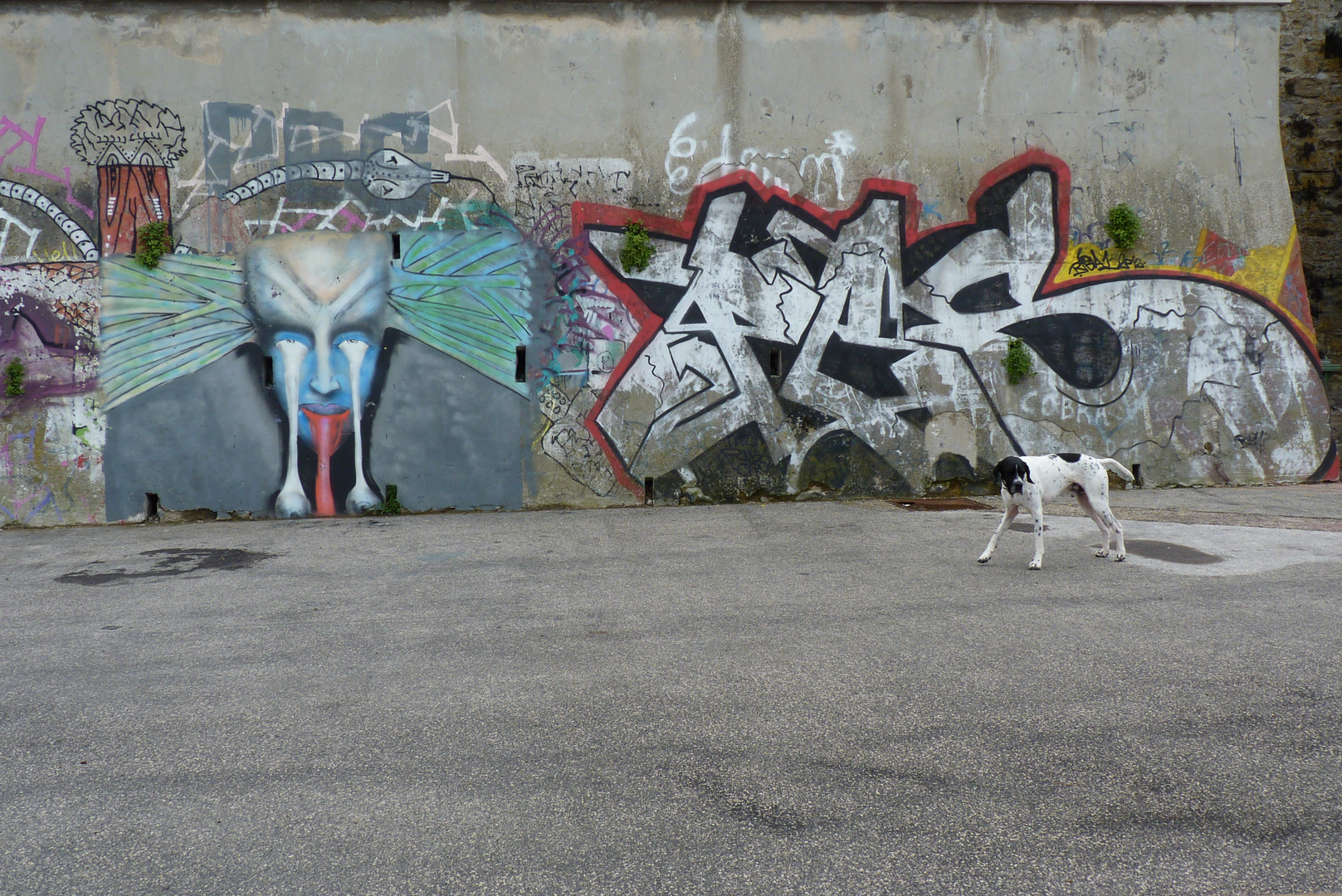 a dog and gravity - sorry, i meant graffiti